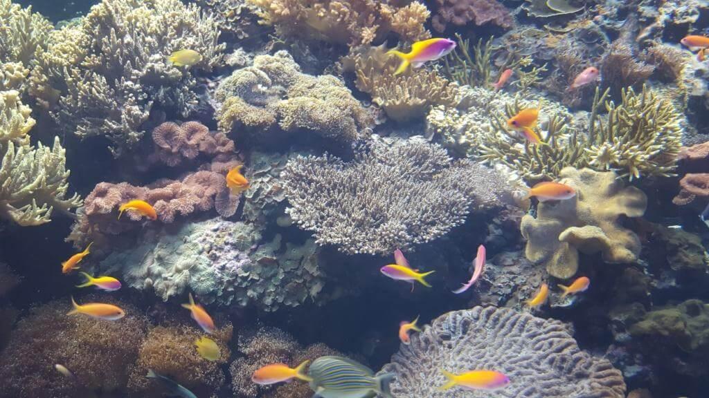 Aquariumrosa-klein-komp Balance-im-Sein Valeska_Otto